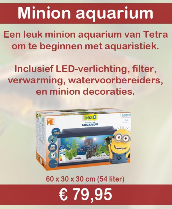 Tetra Minion aquarium